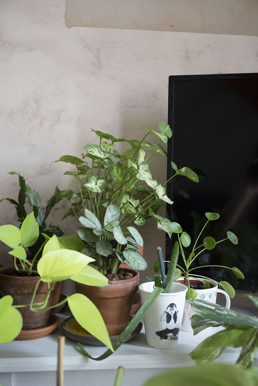 30m2 plantes appartement