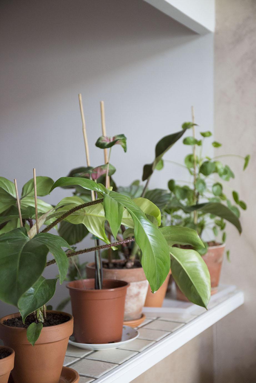 plantes 30m2