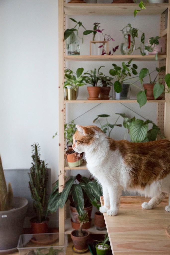 decorer avec des plantes