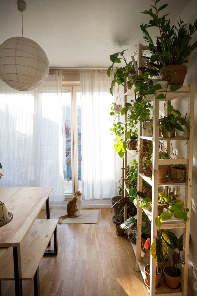 plantes decoration