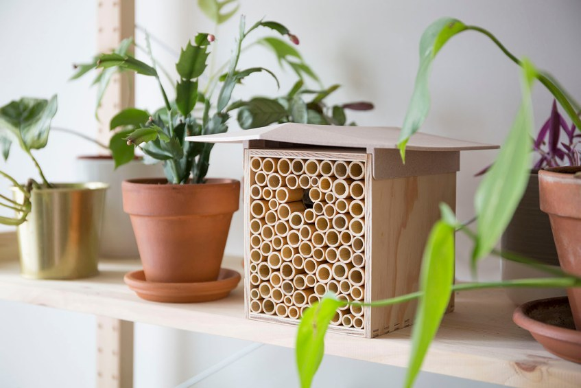 beehome abeille sauvage