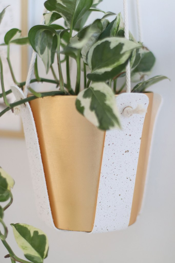 plante suspension whitejungle