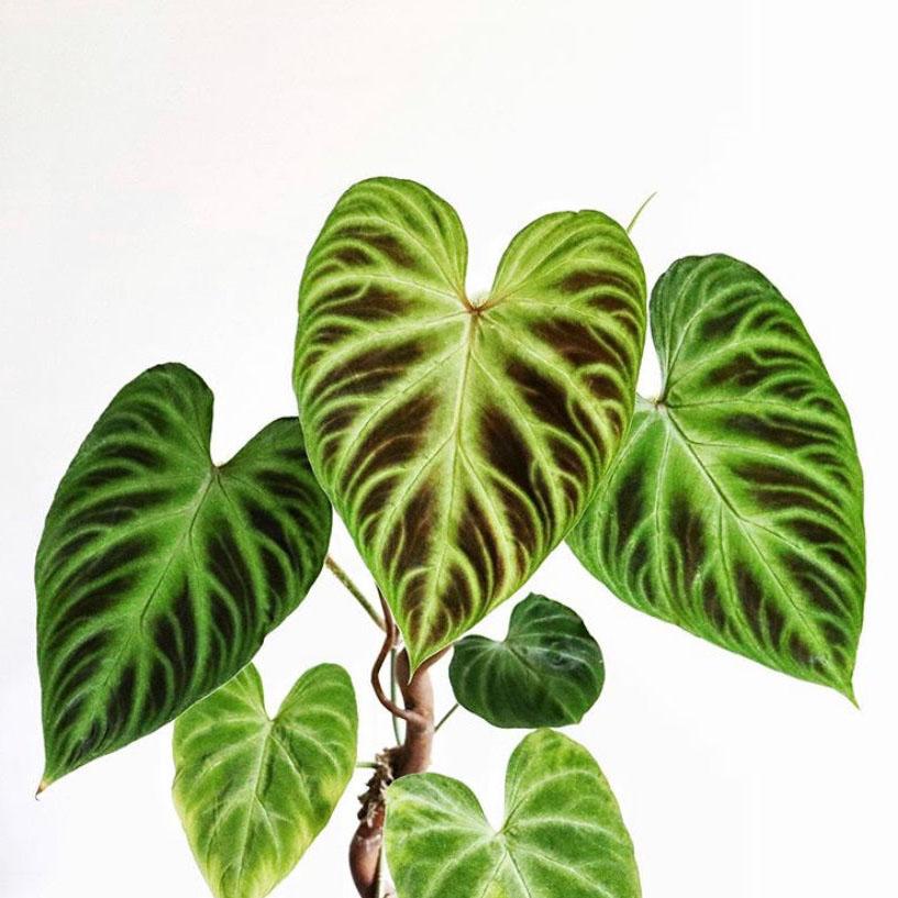 plantes wishlist 2020