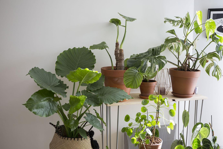 sos plante va mal