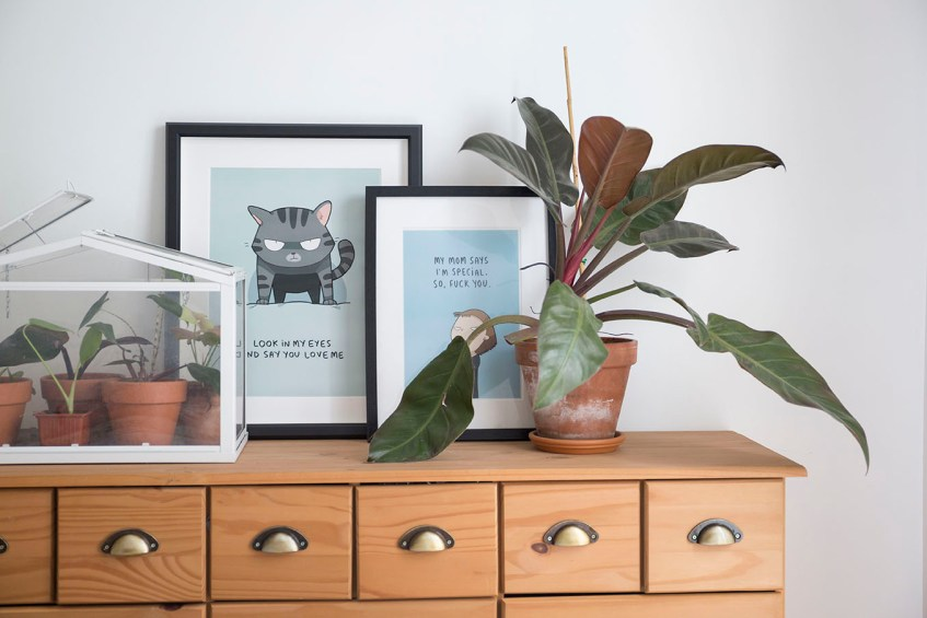 decoration chambre plantes