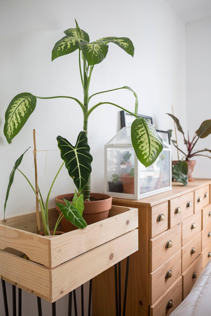plantes chambre decoration