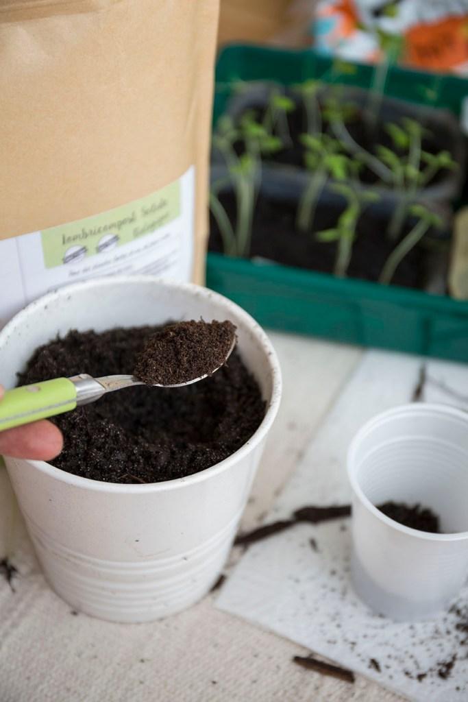 potager repiquage semis
