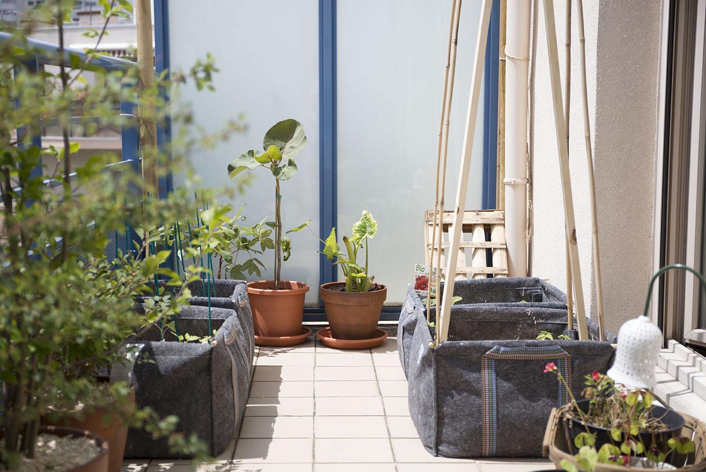 planter en pleine terre