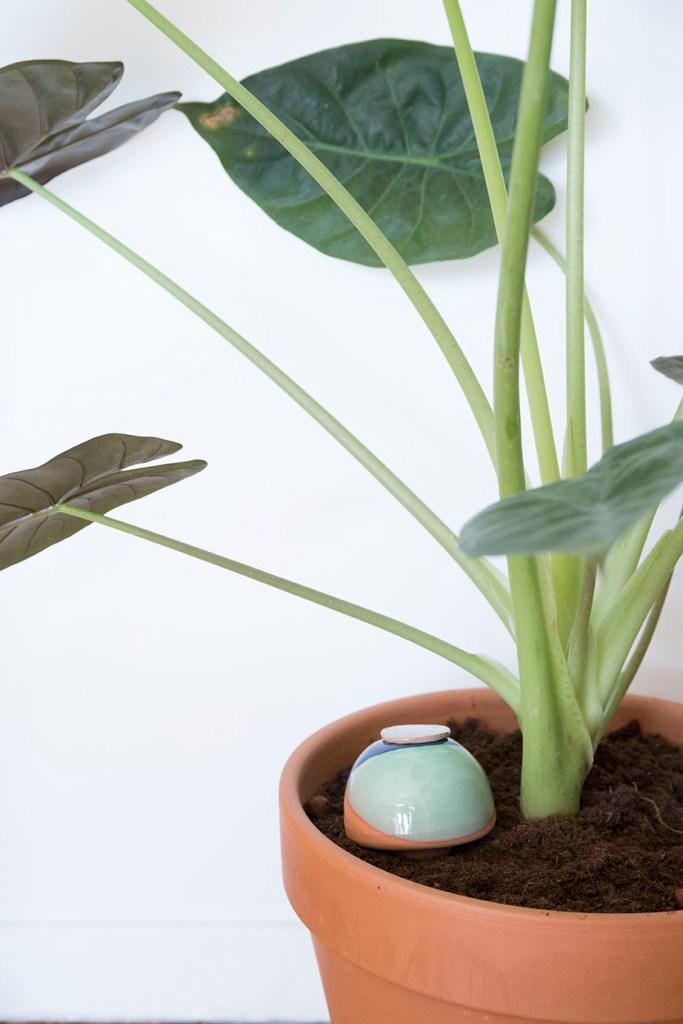 acessoire ete plante