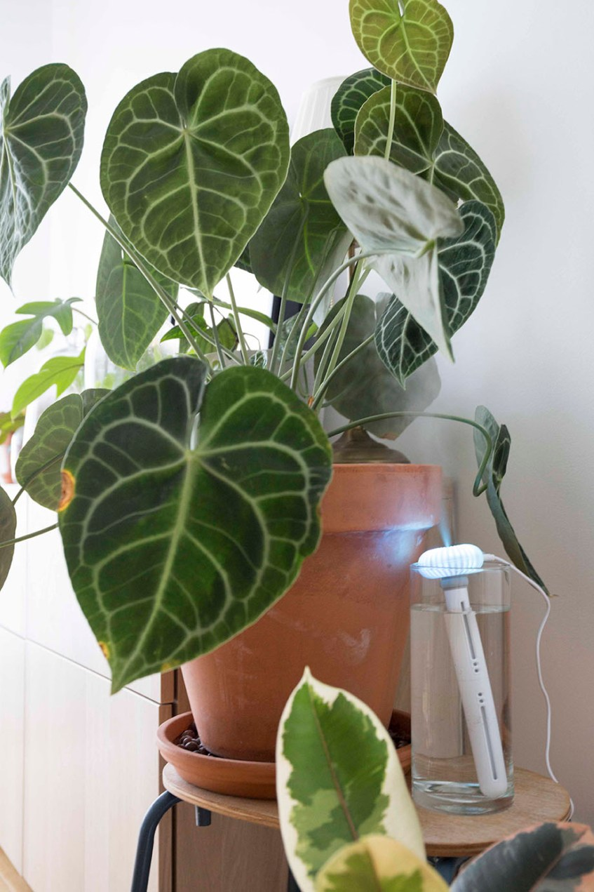 taux humidité plante