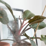 taux humidite plantes