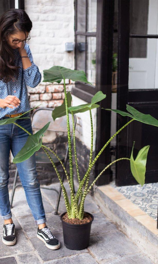 brume boutique vegetal ambulante