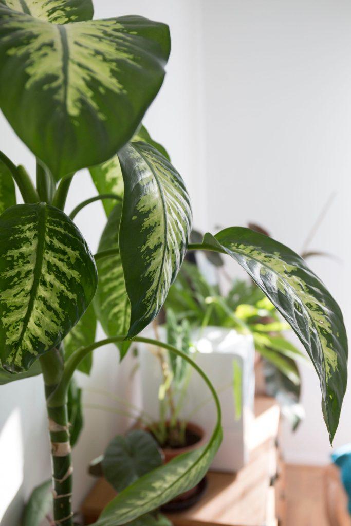engrais printemps plante