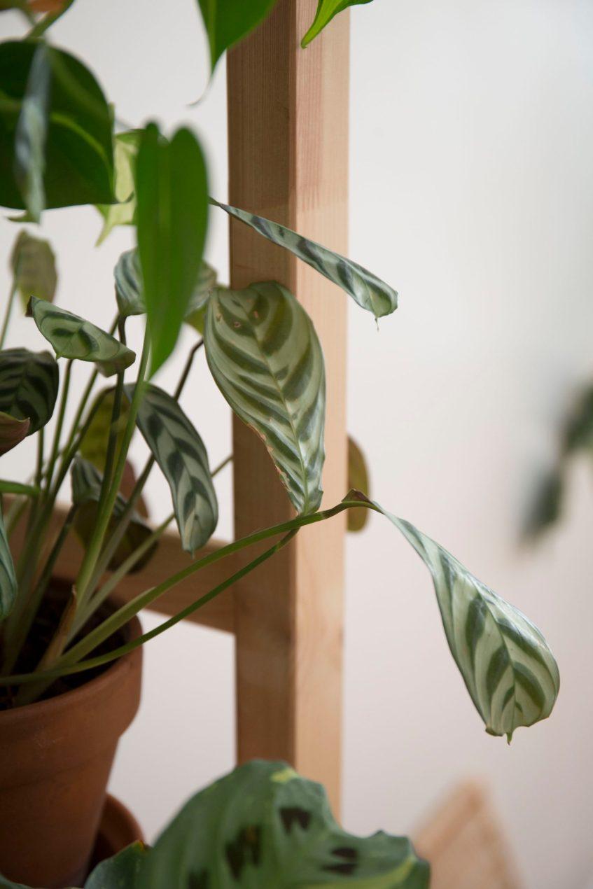 plante engrais printemps