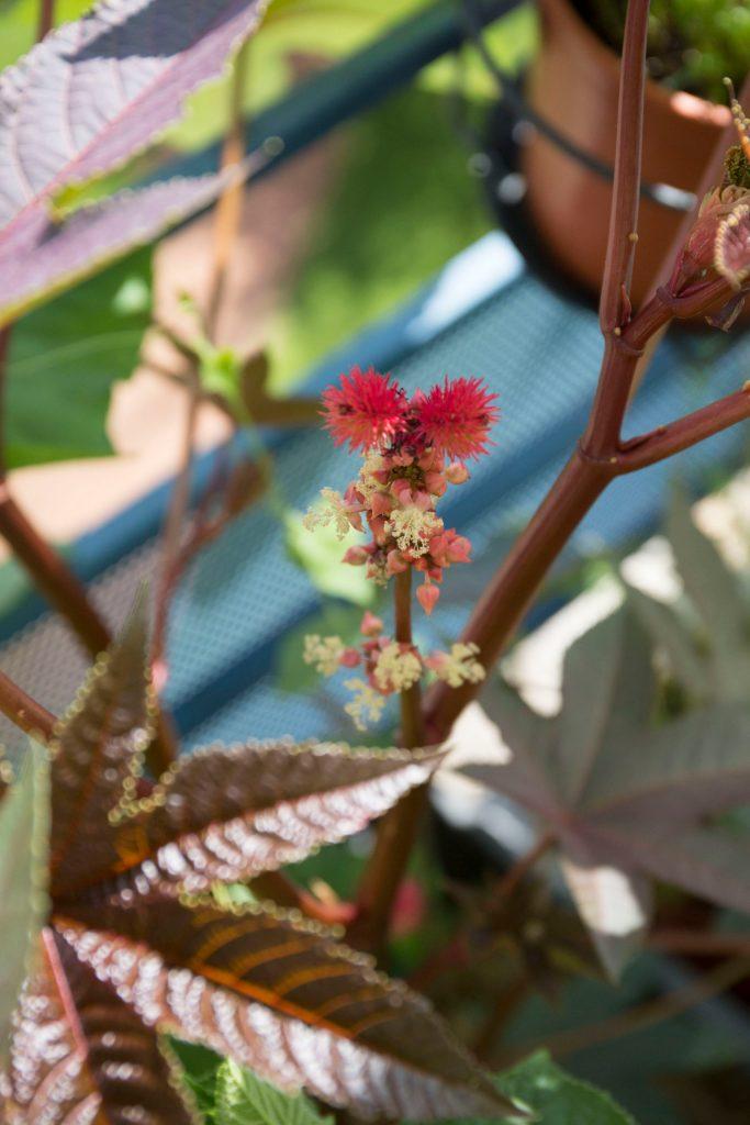 plante service potager