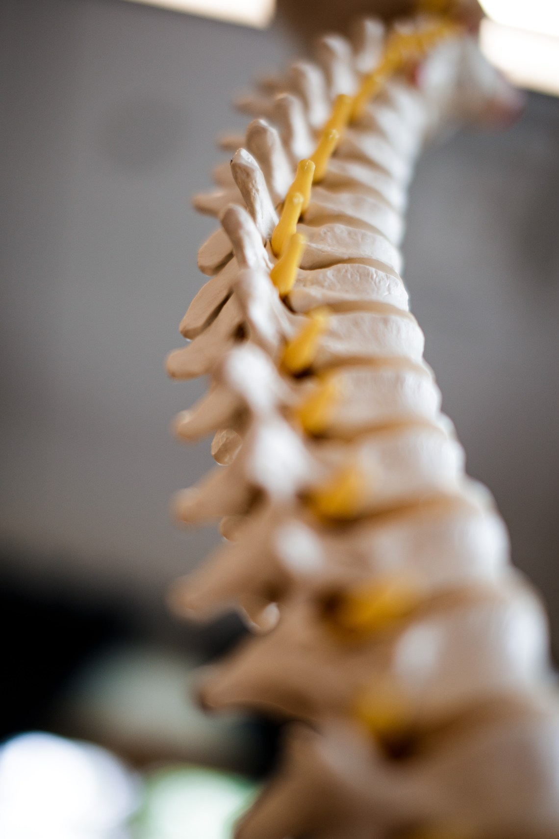 SPINAL CORD, DURANGO CO CHIROPRACTIC, APPOINTMENT IN DURANGO CO, SOUTHWEST COLORADO DOCTOR, PAGOSA SPRINGS, CORTEZ, BACK PAIN, SPINAL ADJUSTMENT, PAIN RELIEF, ILLNESS, HEALTH, MOUNTAIN LIVING, BEST IN DURANGO, COLORADO DOCTOR, COLORADO CHIROPRACTOR