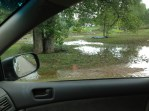 More swamp
