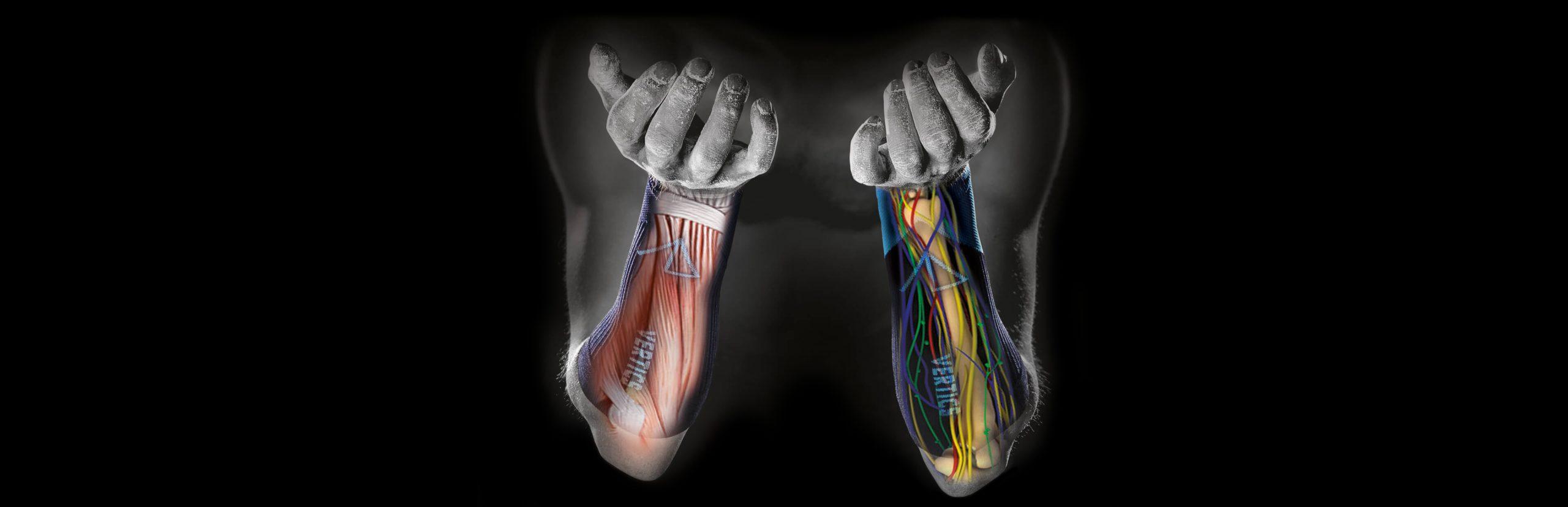Anatomie VERTICS.Sleeves