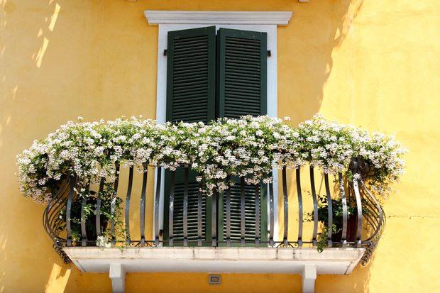 Blühende Balkonpflanzen an einem sonnigen Standort