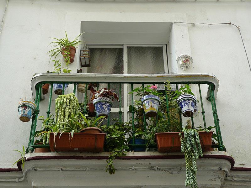 KLeiner Balkon mit vielen Pflanzen