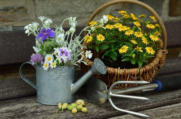 Bunte Blumen in kreativen Gefäßen