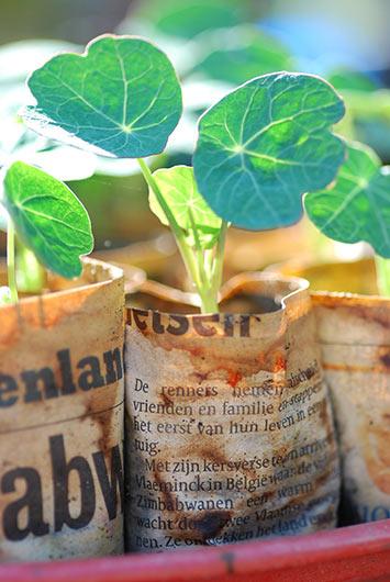 Kapuzinerkresse im Blumentopf aus Papier
