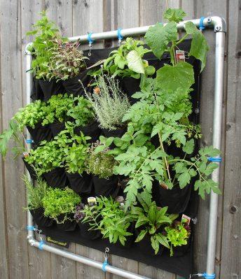 Kräuter-Mischkultur in hängenden Wandgarten