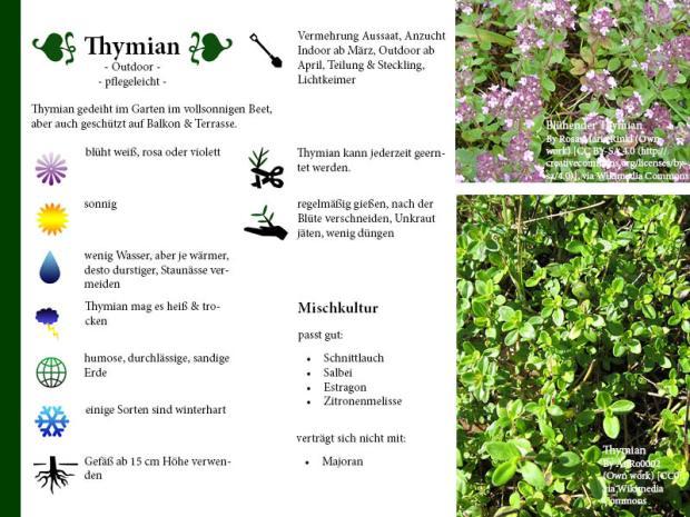 Pflanzenporträt Thymian
