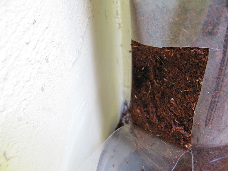 Setze vorsichtig Samen oder Setzlinge in die Erde bei den Laschen