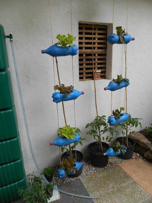 Das Flaschenbeet ist fertig und bepflanzt