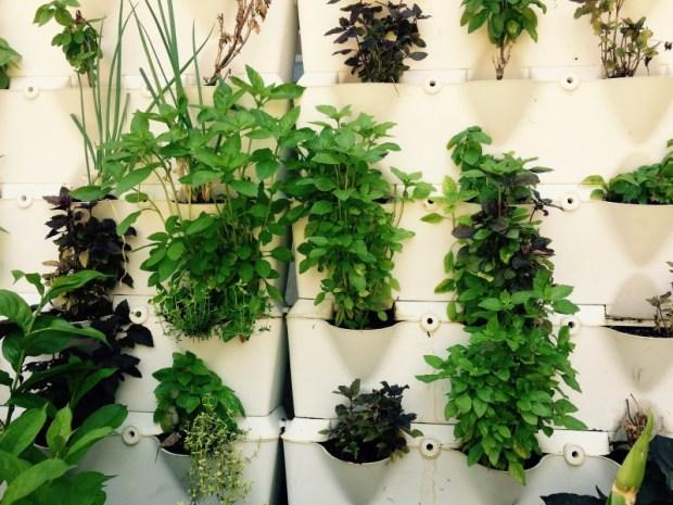 Kräuter sind ideale Zimmerpflanzen, besonders vertikal. Foto: Pixabay.