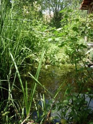Teich im Naturlehrgarten Ranis