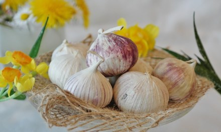 Garlic Reduces High Blood Pressure Levels