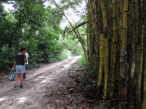The road to get Bamboo