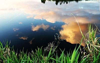 Tratamiento ecológico para limpieza de estanques y la eliminación de algas