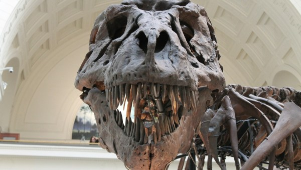 6 Reasons To Teach Your Kids About Dinosaurs