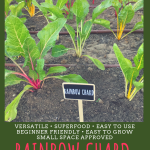 Why You Should Plant Chard