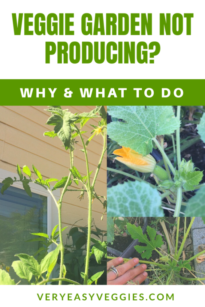 If your beginner garden isn't producing, you're waiting on squash or tomatoes not ripening, read this page to learn what to do to grow more vegetables!