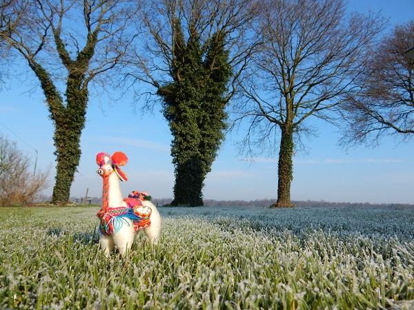 Lola de Lama, vanuit Argentinië mee naar Nederland gekomen en zal me vergezellen in het volgen van mijn hart...