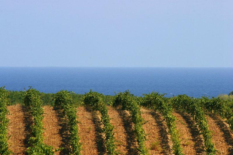 Vigne donnant sur la mer en Corse - credit photo CIVC