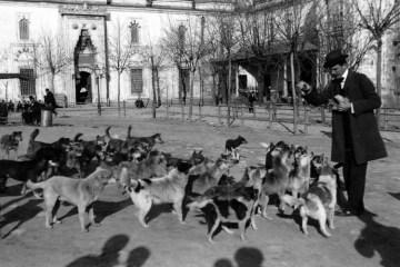 İstanbul. Sokak Köpekleri.