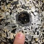 ореол мицелия и сухое отверстие