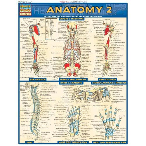 anatomy chart 2 Anatomy Chart 2 Vesica Institute for Holistic Studies