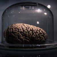 Факти за човешкият мозък