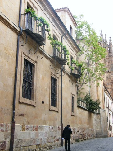 The vine in Salamanca