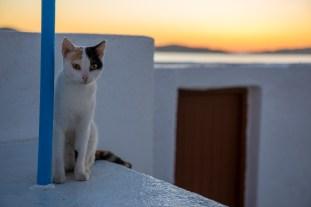 En og annen gresk katt