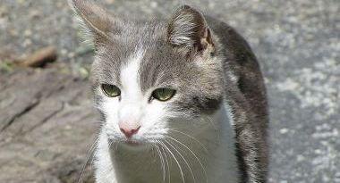 кошка Сисси