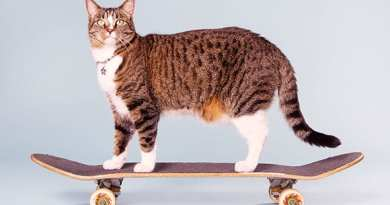 кошка-скейтбордистка