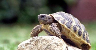 черепахи1