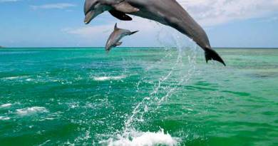 дельфини